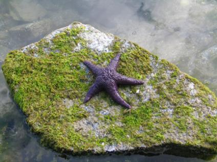 Sea star at Clam Bay